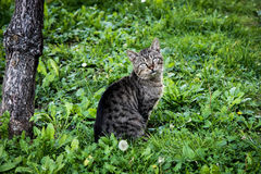 Human stop stalking. Cat annoyed by photographer's clicks Stock Photography