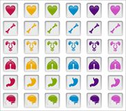 Human Systems Badges Light. Vector Shapes, concept of human systems badges or medical areas, fully Stock Images