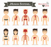 Human systems vector illustration