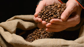 Human takes a heap of roasted coffee beans by both hands from a sac Royalty Free Stock Photography