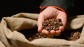 Human takes a heap of roasted coffee beans by hand from a sac and look it Stock Image