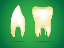 The human teeth Royalty Free Stock Photos