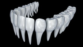 Human Teeth 3d animation. stock footage