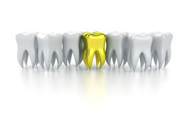 The human teeth Royalty Free Stock Image