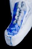 Human teeth, model Stock Image