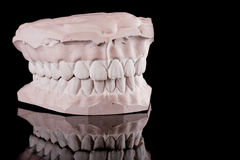 Human teeth, model Royalty Free Stock Image