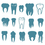 Human teeth set Royalty Free Stock Image