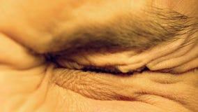 Human tightly closing eyes, reaction to bright light, photophobia, macro closeup. Stock photo royalty free stock photos