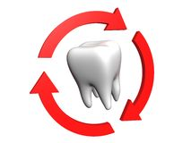 Human tooth. Rounded with arrows royalty free illustration