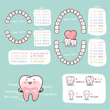 Human tooth cartoon anatomy chart Stock Photo