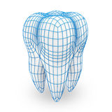 Human Tooth with Grid Royalty Free Stock Photography