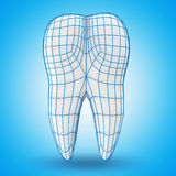Human Tooth with Grid Stock Photography