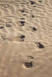Human trace on sand Royalty Free Stock Images