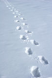 Human traces. On a snow royalty free stock images
