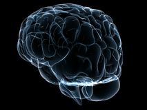 Human transparent brain Stock Photos