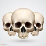 Human tree skulls isolated on white Royalty Free Stock Photos