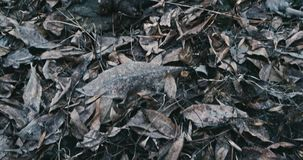 Human turd POV real one on the fallen leaves stock video footage