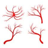 Human vein set vector symbol icon design. Royalty Free Stock Image