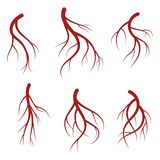 Human veins, red blood vessels realistic vector medical illustration. Human veins, red blood vessels set. Realistic vector medical illustration isolated on white stock illustration