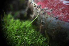 Human Versus Nature Bottle Cap Moss Abstract Background stock images