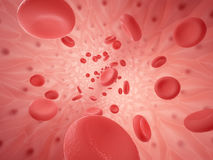 Human vessel with erythrocyte Stock Photography