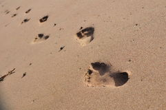 Human walking on a beach. Human footprints on a beautiful beach in New Zealand Royalty Free Stock Images