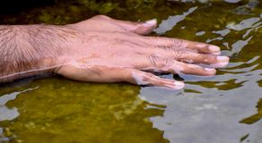 Human Wet Right Hand Photograph. The wet right hand of a human being kept inside the pond's water Stock Photography
