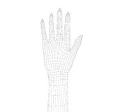 Human wireframe hand on white background. 3D image royalty free illustration