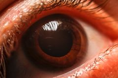 Human women eye. Macro, close up photography stock photography