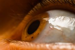 Human women eye. Macro, close up photography royalty free stock image