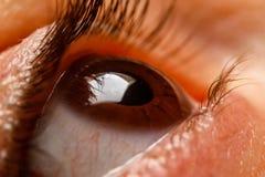 Human women eye. Macro, close up photography royalty free stock photography