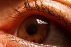 Human women eye. Macro, close up photography royalty free stock photos