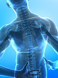 Human x-ray spine Stock Image