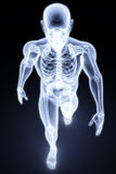 Human xray Royalty Free Stock Photos