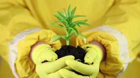 A human in yellow protective suit holding in hands soil and a green young plant stock footage