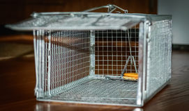 Humane mouse trap Royalty Free Stock Image