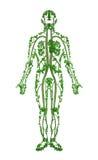 Humano - árbol 2 Imagen de archivo libre de regalías