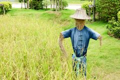 Humanoid scarecrows are usually dressed in old clothes and place. D in open fields to discourage birds from disturbing and feeding on recently cast seed and Stock Image