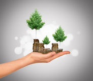 Humans arm holding tree and coins. Humans arm holding tree with coins on colorful background Royalty Free Stock Photo