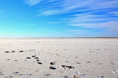 Humans and cassowary foot prints in Lake Eyre. In central Australia. Lake covered with salt crust. Blue sky with clouds. Lowest narural point in Australia. Mud Royalty Free Stock Photos