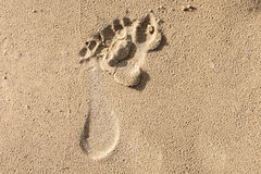 Humans feet prints on a wet sand. Abstract background Royalty Free Stock Image