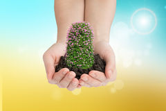 Humans hands holding flowers, front view Royalty Free Stock Photos