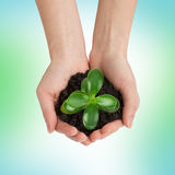 Humans hands holding green plant with ground Stock Photography