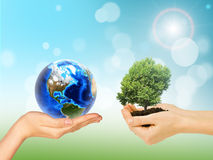 Humans hands holding green tree and Earth Royalty Free Stock Image
