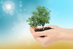 Humans hands holding green tree Royalty Free Stock Photo