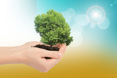 Humans hands holding green tree with mould. Humans hands holding tree with ground on colorful background Stock Images