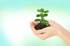 Humans hands holding plant. With ground on colorful background Royalty Free Stock Photo