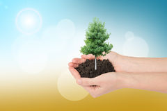 Humans hands holding tree. With ground on colorful background Royalty Free Stock Images