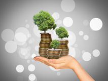 Humans left hand holding tree and coins. Humans hand holding tree with coins on colorful background Stock Photos