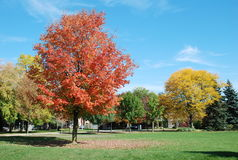 Humber Park, Toronto stock photography